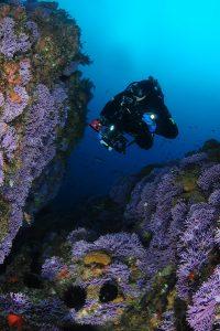 diver hydrocoral